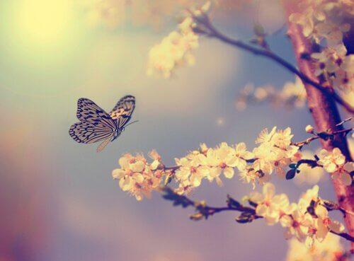farfalla su fiori