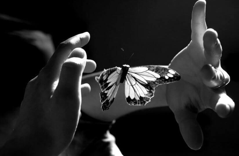 farfalla-tra-due-mani