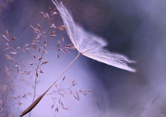 fiore bianco lacrime