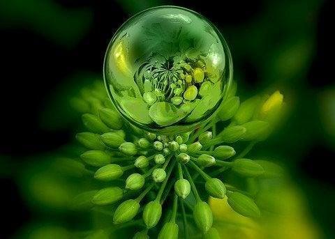 goccia su una pianta verde fonte della vita