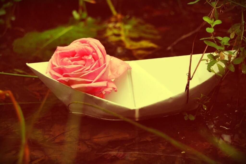 rosa-su-barca-di-carta