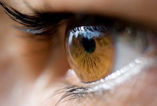 Cosa trasmette il colore degli occhi la mente - Colore degli occhi diversi ...