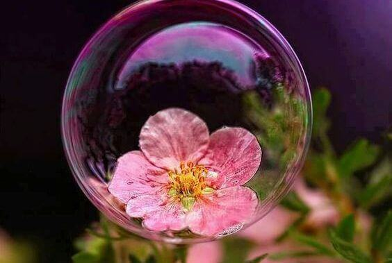 bolla di sapone che contiene fiore