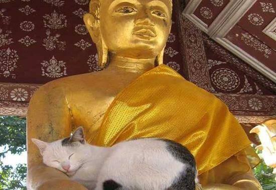 buddha e gatto