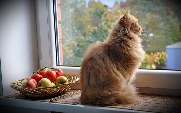 gatti e cesto di mele e pomodori
