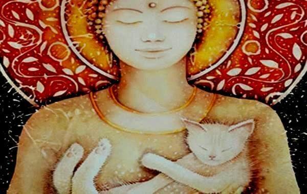 immagine di buddha e gattino