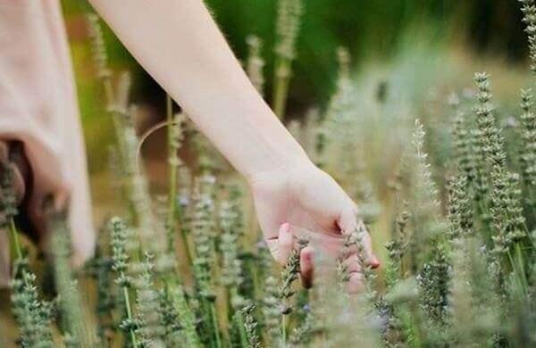 mano afferra piante