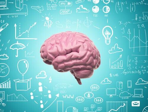 Grazie alla neuroplasticità non smettiamo mai di imparare
