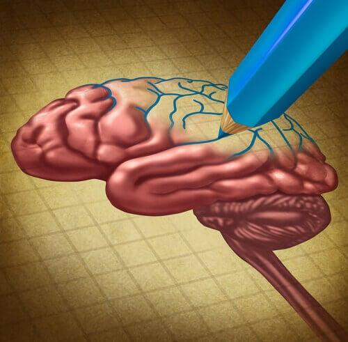 Matita-disegna-cervello