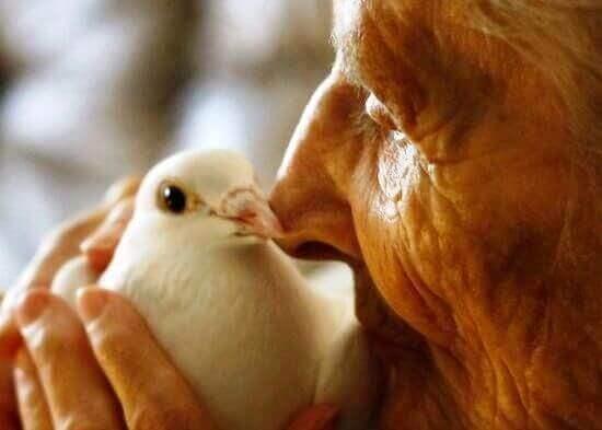 anziano-con-colomba