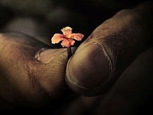 mani sporche e fiore