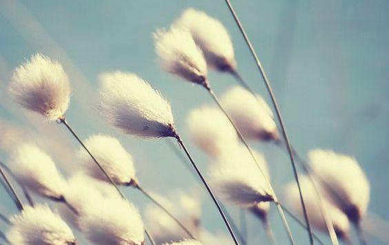Vento-fiori