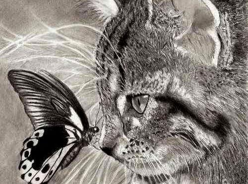 gatto con farfalla sul naso