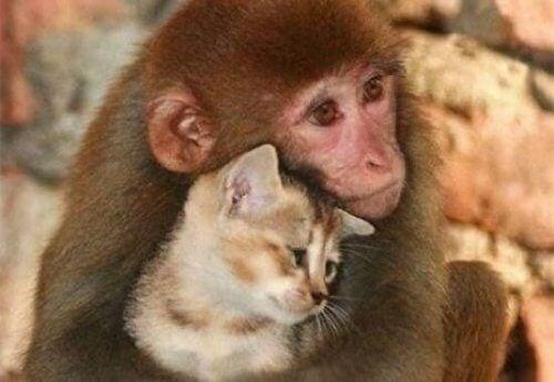 scimmia e gatto