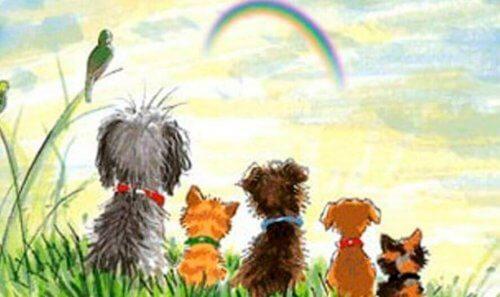 animali arcobaleno