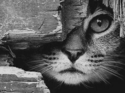 gatto-che-si-nasconde-dietro-un-tronco