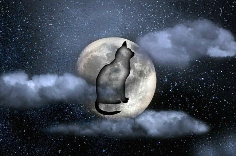 gatto-riflesso-nella-luna