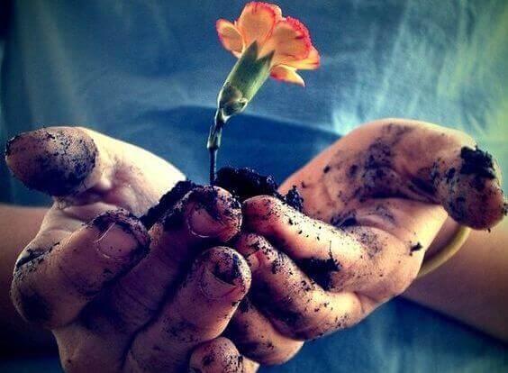 mani che reggono un fiore