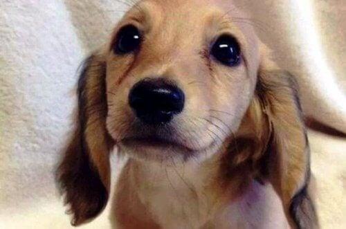 Gli occhi degli animali parlano un linguaggio unico