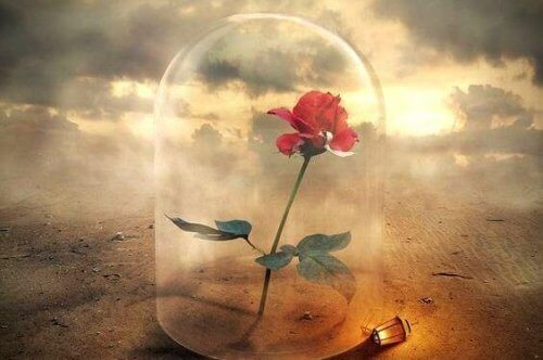 rosa sotto campana di vetro