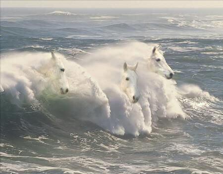 cavalli-in-mare