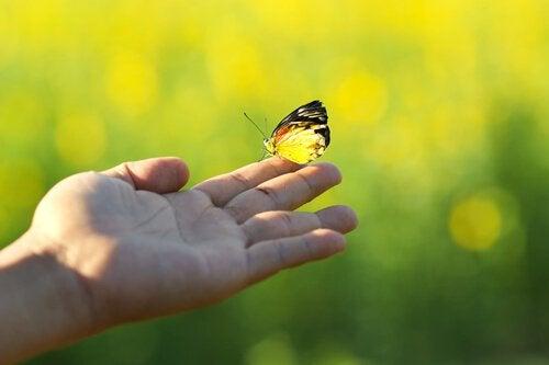 farfalla-su-una-mano