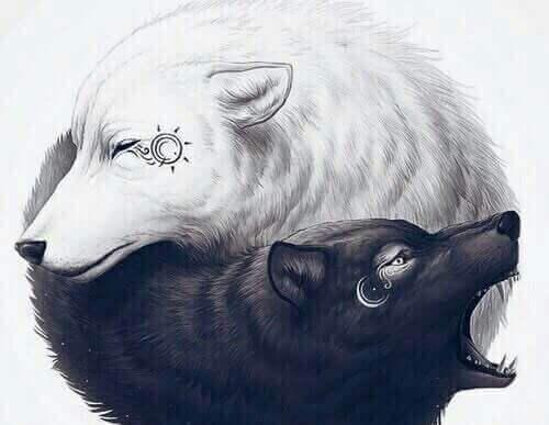 lupi-bianco-e-nero-yin-yang