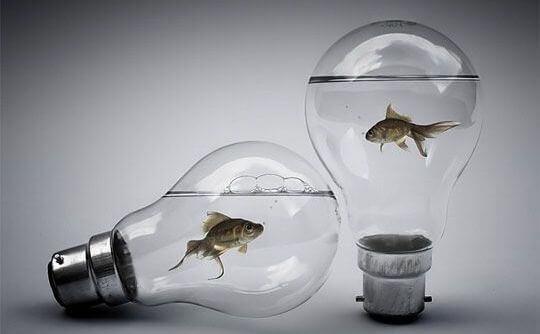 pesci-dentro-alle-lampadine