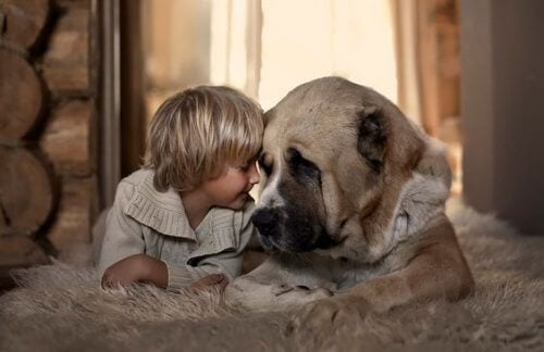 bambino-appoggia-testa-su-cane