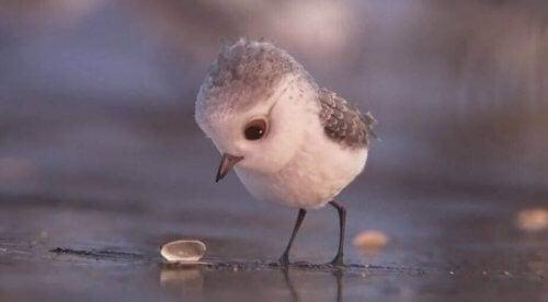 uccellino-guarda-conchiglia