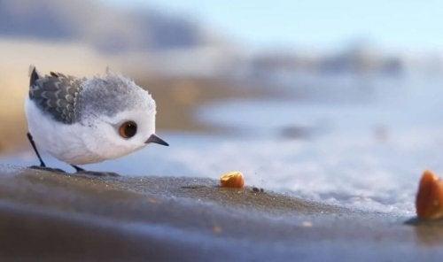 uccellino-guarda-sabbia