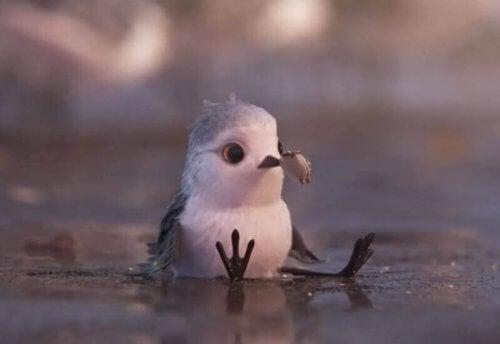 uccellino-sulla-sabbia-con-conghiglia-nel-becco