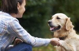 cane-con-ragazza i cani