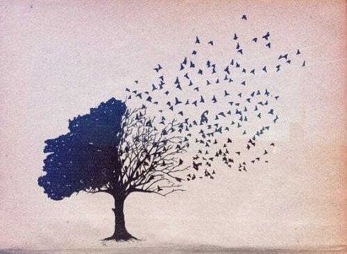 albero-meta-chioma-meta-passeri