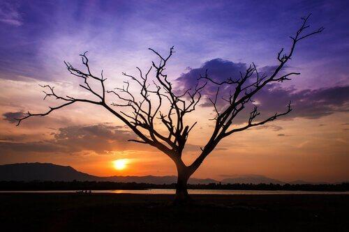 albero-rami-spogli
