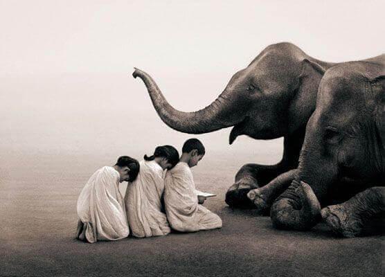 bambini-ed-elefante