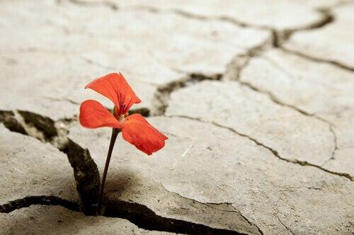 fiore-in-terra-spezzata