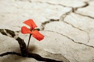 resilienza fiore-nel-terreno-spezzato