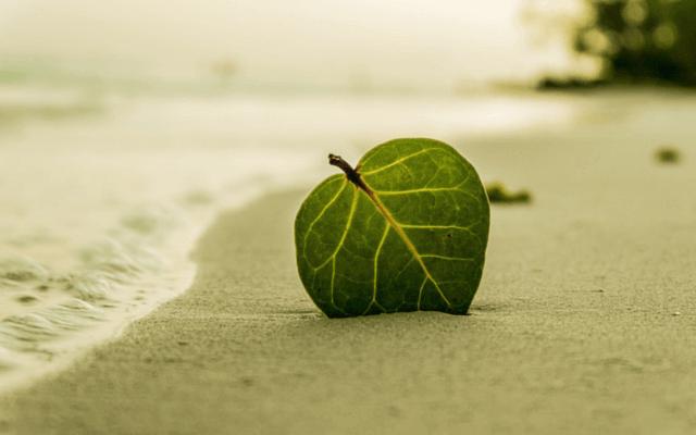 foglia-sulla-spiaggia