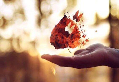 foglia-da-cui-esce-una-farfalla