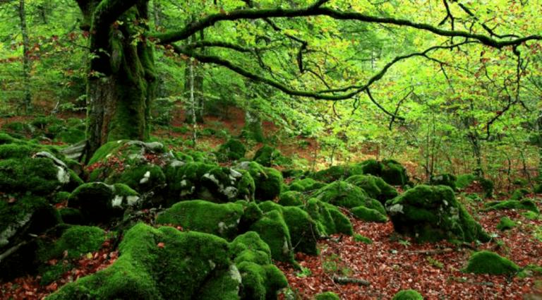 Bagno di foresta: antidoto contro lo stress