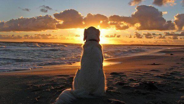 Cosa ci possono insegnare i cani sui nostri problemi?