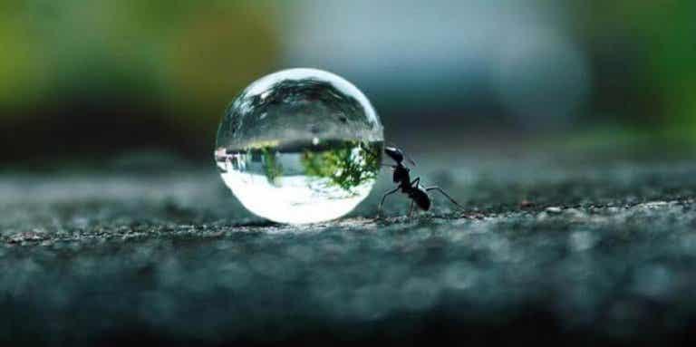 La perseveranza alimenta i sogni