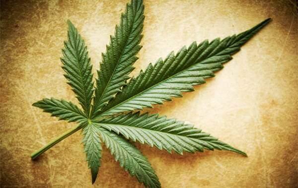 Miti e verità sulla marijuana