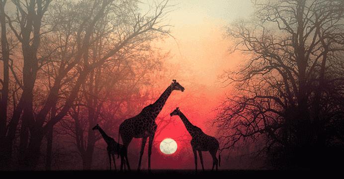 """""""Aspetta che la tua anima ti raggiunga"""" bellissimo racconto africano"""