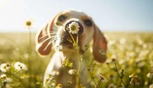 cane campo di fiori l'empatia dei cani