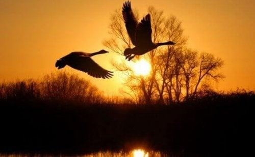 Stare in silenzio per ascoltare la natura