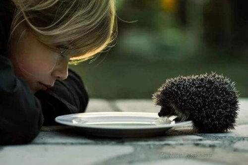 Bambina che guarda un riccio