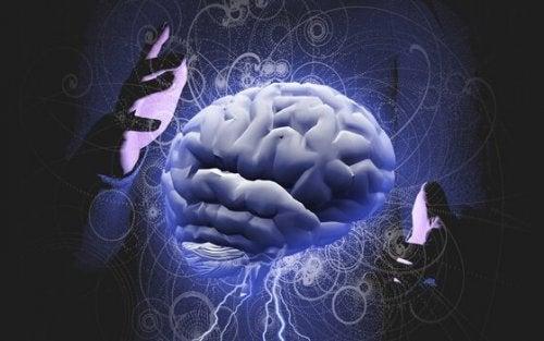 Gli emisferi del cervello umano