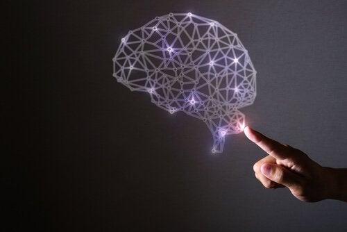 Evoluzione del cervello umano